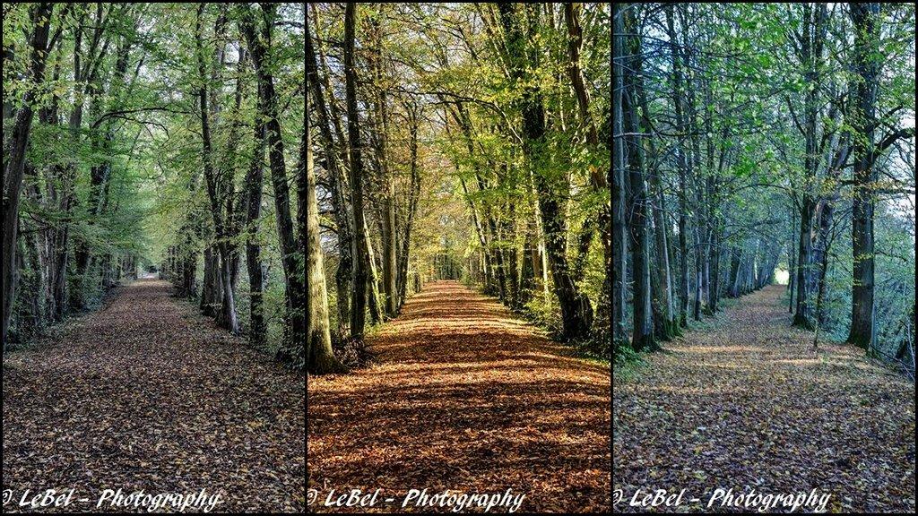 Allées du Parc de l'Abbaye de Liessies dans le Nord ! dans Cartes postales diffusion-copier-4