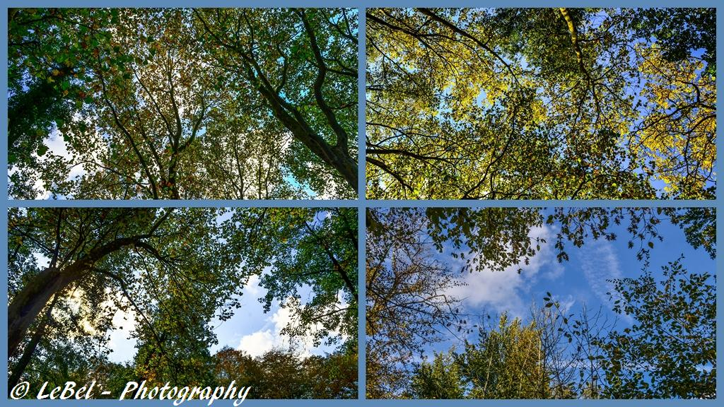 Petit medley sur le ciel au travers des branches ! dans Cartes postales exportation-sans-titre2-copier1